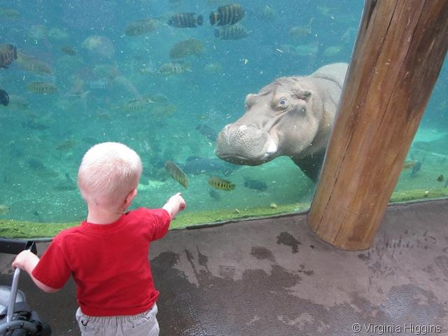 St Louis Zoo