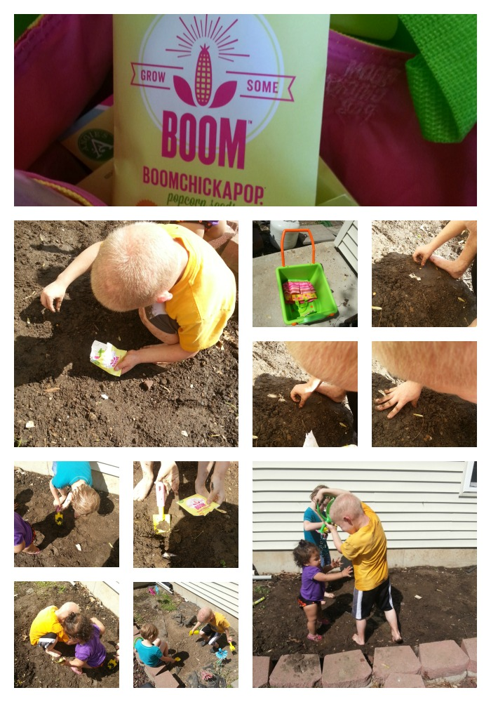 Planting Popcorn Seeds #growsomeboom