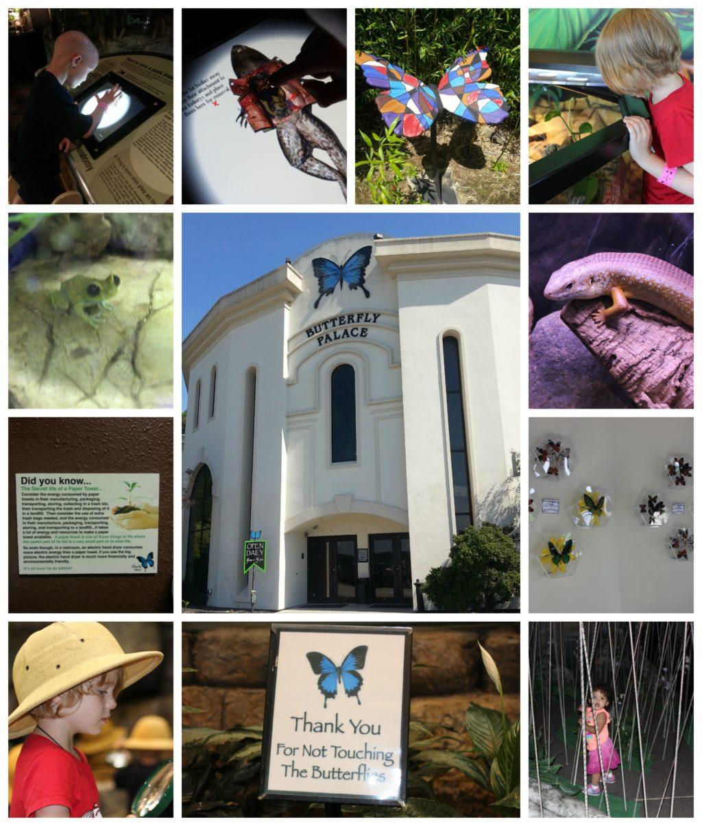 The Butterfly Palace & Rainforest Adventure #ExploreBranson
