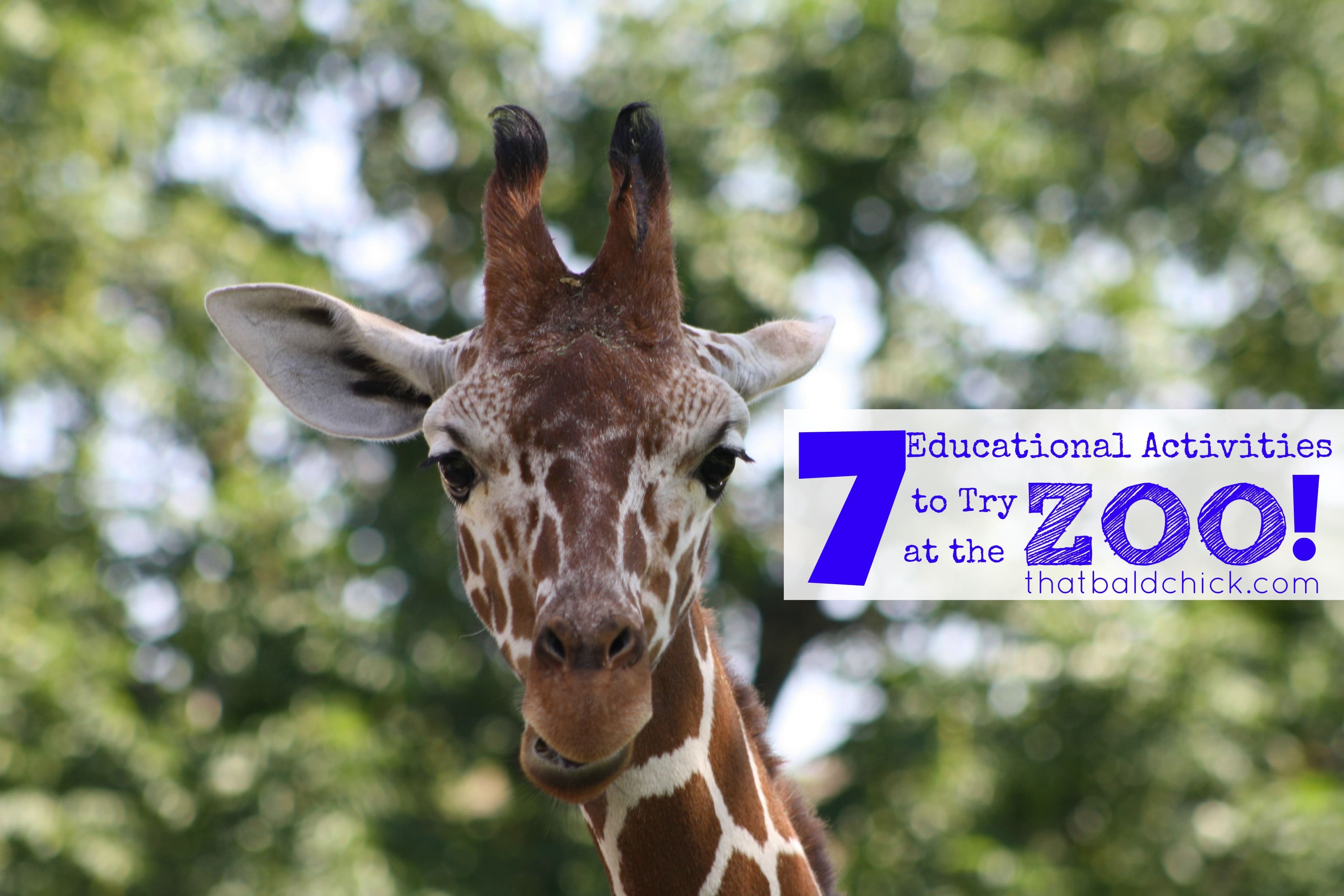 7 educational activities to try at the zoo at thatbaldchick.com