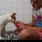 Ways Kids Can Volunteer to Help Animals