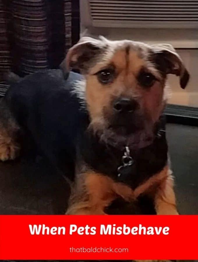 when pets misbehave