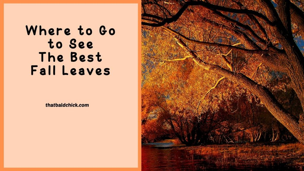 Where to Go to See the Best Fall Leaves