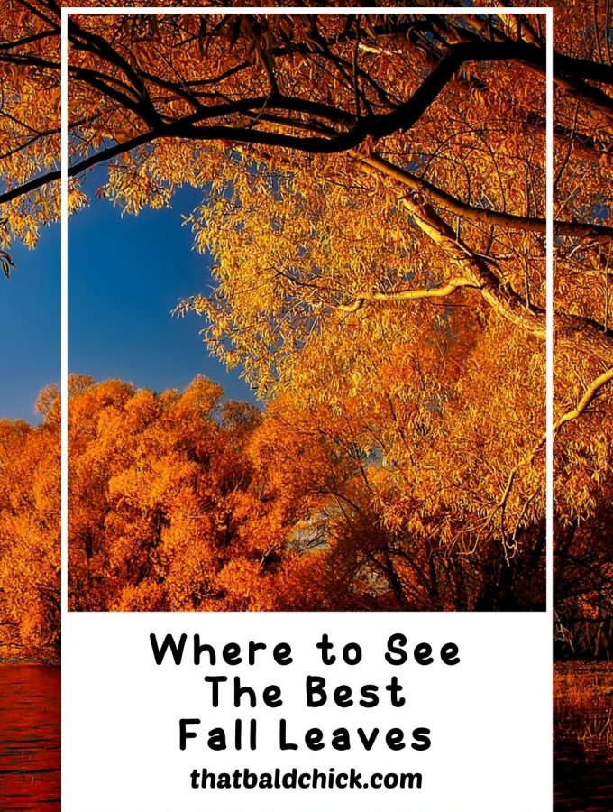 Where to See the Best Fall Leaves