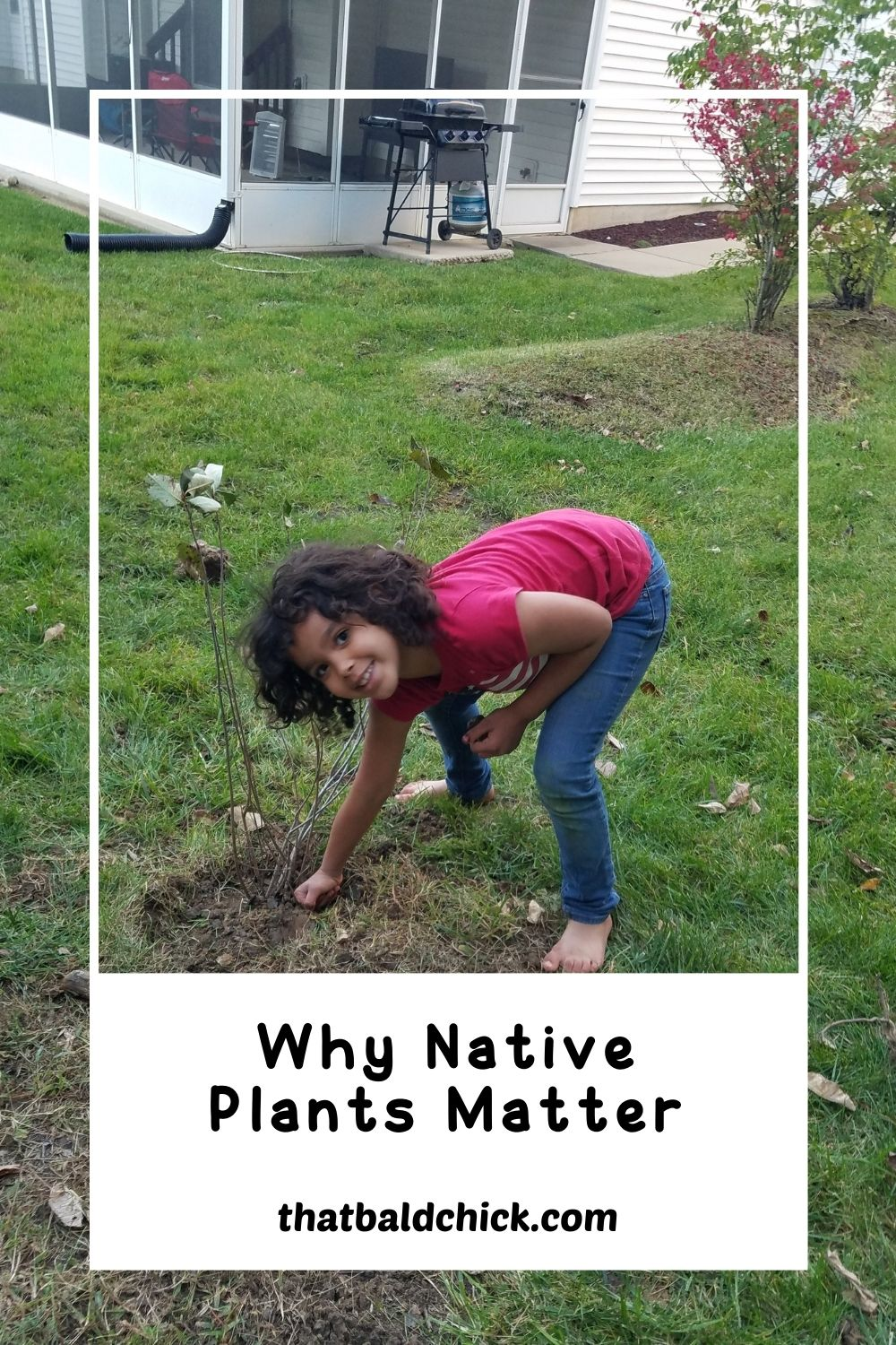 Why Native Plants Matter